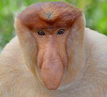 Proboscis Monkey - Nasalis larvatus by Andrew Trevor-Jones
