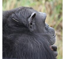 Chimp Eden IV Photographic Print
