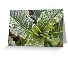 Dandelion Frost Greeting Card