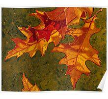 Oak Leaves Poster