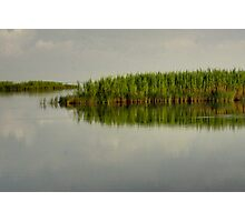 Louisiana Bayou 4 Photographic Print