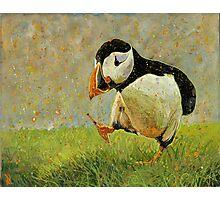Puffin Strut Photographic Print