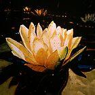 Glowing Lotus by Richard Bradish Jr
