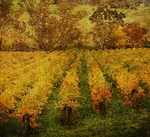 Golden Gumeracha by Wendi Donaldson