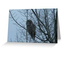 Owl in a Tree Greeting Card