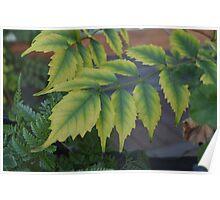 Summer Garden Leaves Poster
