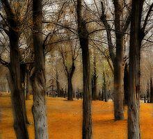 Dream Fall by Katayoonphotos