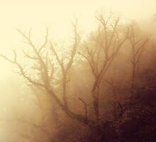 Mystic by Katayoonphotos