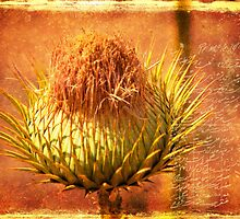 Persian Thistle by Katayoonphotos