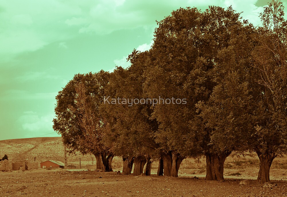 The Tree Line Barrier by Katayoonphotos