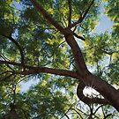 Canopy by Noam Gordon