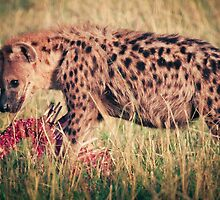 Hyena Lunch by Jill Fisher
