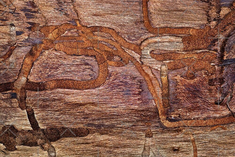 Termite Racetrack by Scott  Cook