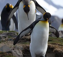 Penguins by Coreena Vieth