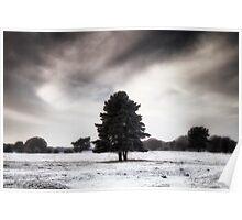 Winter in Elveden Poster