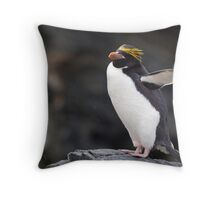 Macaroni Penguin, Cooper Bay, South Georgia Throw Pillow
