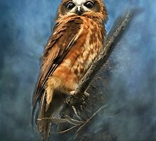 """""""Eyes Wide Open"""" by Heather Thorning"""