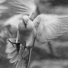 Souls of the Sky by Linda Cutche