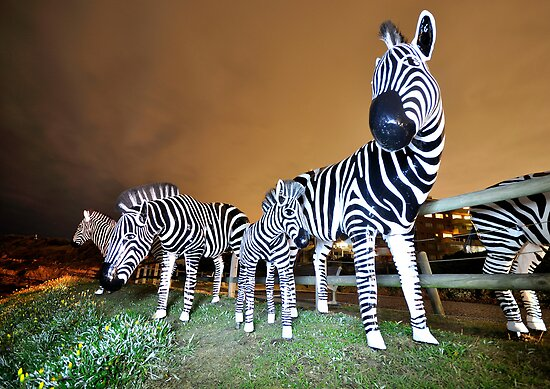 Zebras on our Patch by Ian Berry