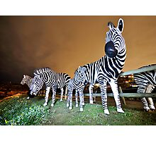 Zebras on our Patch Photographic Print