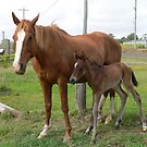 Horse and Foal by Eeva47