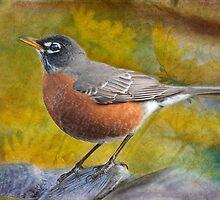 American Robin by Bonnie T.  Barry