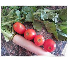 Radish and Tomatoes Poster