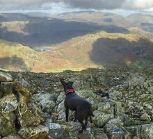 The Dog,The Photographer and The Mountain by Jamie  Green