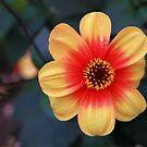 Flower Power by John Dalkin
