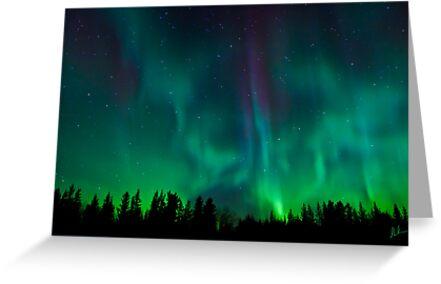 Wild Night Auroras by peaceofthenorth