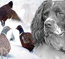 Working Spaniel by Furtographic