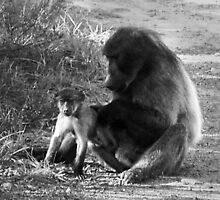 Sub-adult and baby baboon groom in the sun. by kimmylowe1986