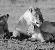 Brotherly Love by Jill Fisher