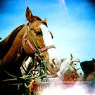 horses by sara montour