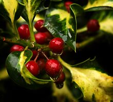 Holly Berry by moor2sea