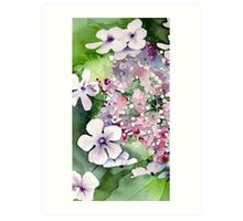 Lace Cap Hydrangea Art Print