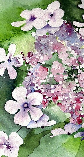 Lace Cap Hydrangea by Val Spayne