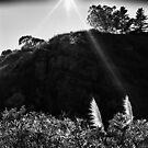 Pampas Grass, Glen Canyon Park, San Francisco by Rodney Johnson