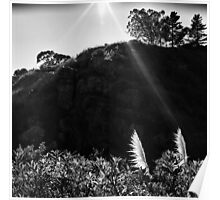 Pampas Grass, Glen Canyon Park, San Francisco Poster