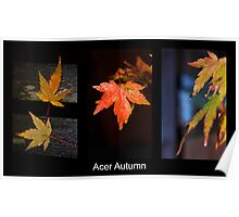 Acer Tryptich Poster
