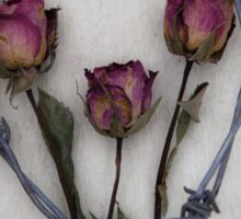 three roses and barbed wire Sticker