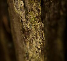 Greeny Tree Bark by Wealie