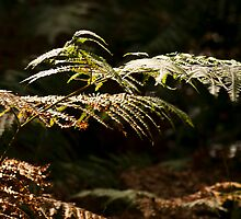 Turning Ferns by Wealie