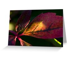 Lightest Touch on Red Greeting Card