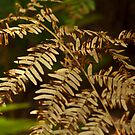 Yellowing Fern by Wealie