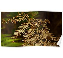 Yellowing Fern Poster