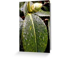 Wet Leaf Greeting Card