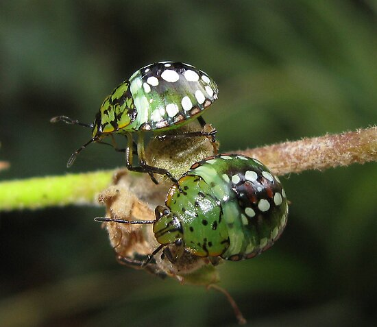 Green ladybird by 4Flexiway
