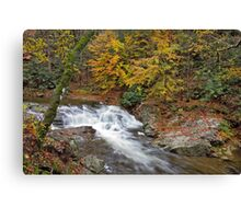 Laurel Creek Cascades III Canvas Print