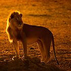 Backlit King by Rashid Latiff